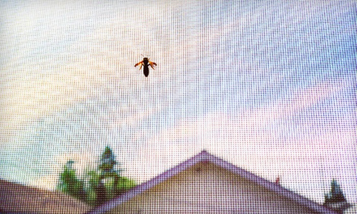 SEC Pest & Termite Control - Tampa Bay Area: Interior/Exterior Pest Treatment and Termite Inspection with Organic Option from SEC Pest & Termite Control (Up to 79% Off)
