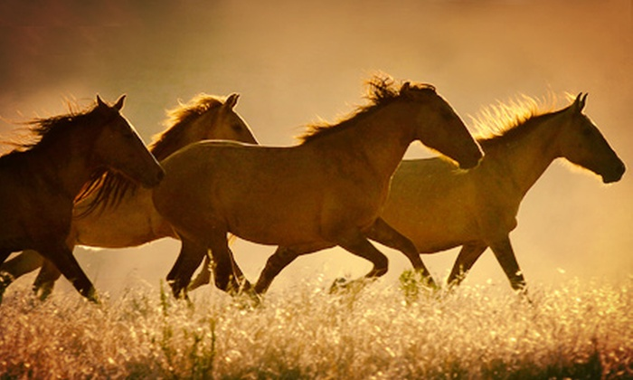 Return to Freedom - Lompoc: $12 for a Wild-Horse-Sanctuary Tour at Return to Freedom (Up to $25 Value)