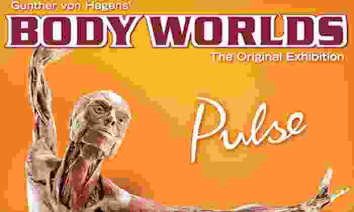 """""""Body Worlds"""" - Discovery Times Square: """"Body Worlds: Pulse"""" Human-Anatomy Exhibit for Child, Senior, or Adult at Discovery Times Square (Up to 51% Off)"""