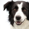 50% Off Canine Non-Anesthesia Teeth Cleaning