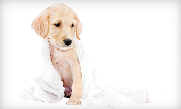 Mutt Hutt Grooming - Sutherland Industrial: $20 for $40 Worth of Dog- or Cat-Grooming Services at Mutt Hutt Grooming