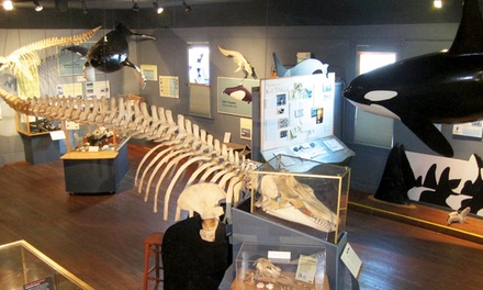 $6 for Two Adult Admissions to The Whale Museum; Valid Sunday-Friday from 3 p.m. to 5 p.m.