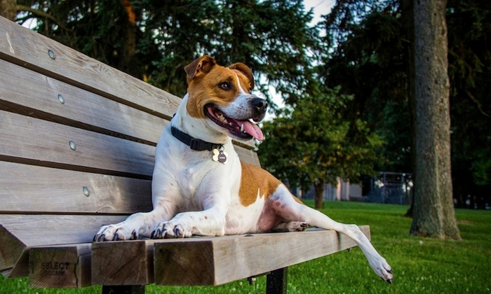Ruff Days Inn - Detroit: One or Two Weeks of Dog Walking from Ruff Days Inn (Up to 53% Off)