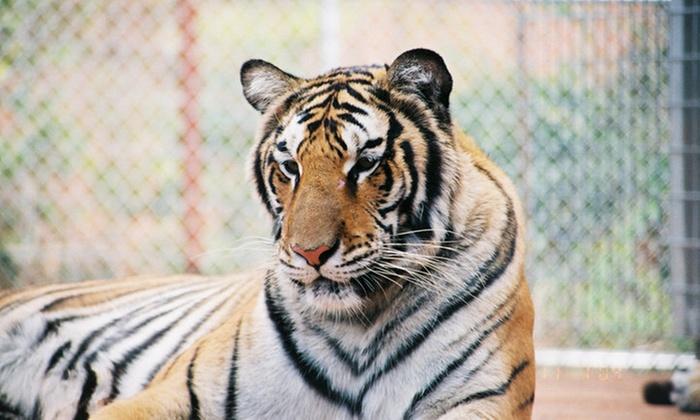 Tiger Creek Wildlife Refuge - Sandy Oaks Estates: Wildlife-Refuge Visit for 2, 4, or 10 at Tiger Creek Wildlife Refuge (Up to 50% Off)