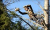 Elmore's Tree Service: $99 for Three Hours of Tree Trimming or Landscaping from Elmore's Tree Service ($300 Value)