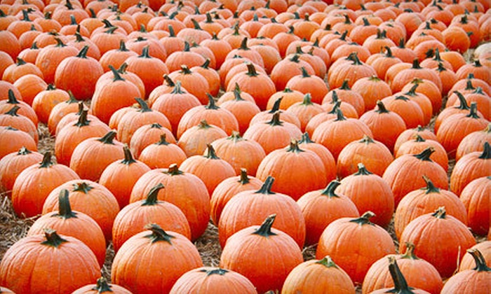 Woodside Nursery and Garden Center - East Patchogue: $12 for Halloween Festival with Pumpkins for Two at Woodside Nursery and Garden Center ($27 Value)