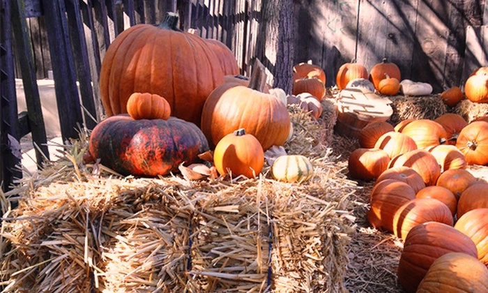 Pumpkin Grove - Sanger : Entry for Four or Six to Forest Adventure with Hayrides, Plus $6 Toward Pumpkins at Pumpkin Grove (Up to 52% Off)