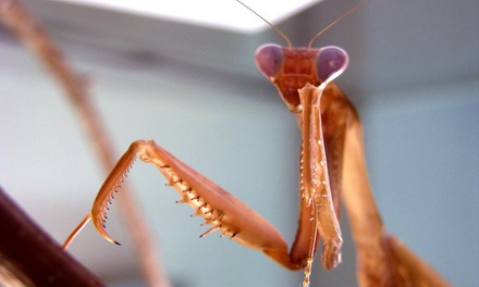 Insectarium Visit for Two or Four or Birthday Party for Up to 10 (Up to 47% Off)
