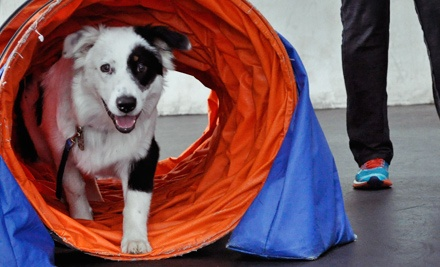Two or Four Dog-Training Classes with Evaluation at Zoom Room Austin (52% Off)