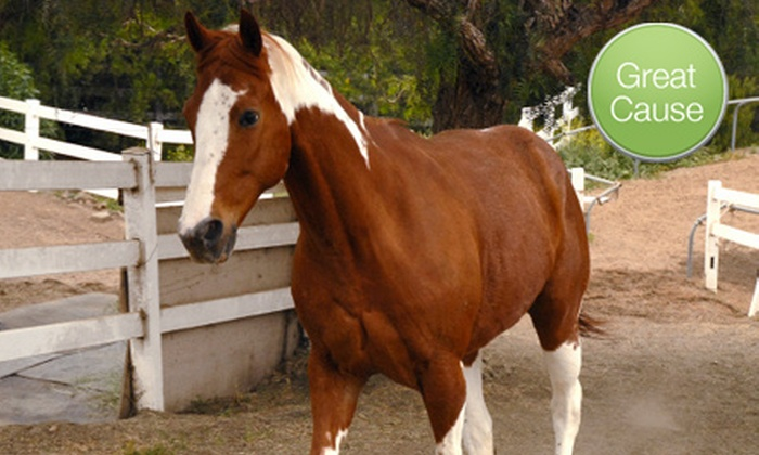 Laughing Pony Rescue: $10 Donation to Laughing Pony Rescue