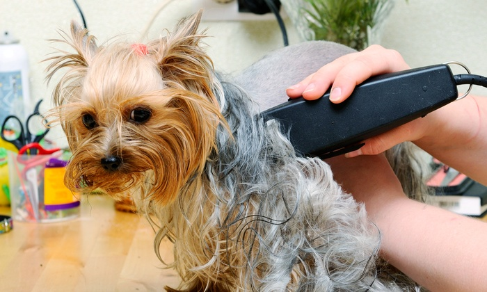 PurrFurred Pet Styling - Bolingbrook: $28 for $50 Worth of Mobile Pet Grooming at PurrFurred Pet Styling
