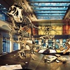 Up to 57% Off Natural History Museum Membership