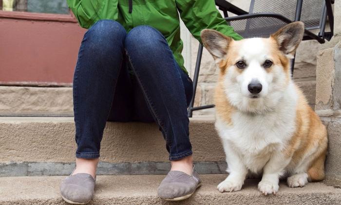 Pooler Veterinary Hospital - Bloomingdale: $19 for Pet Wellness Exam at Pooler Veterinary Hospital ($38 Value)