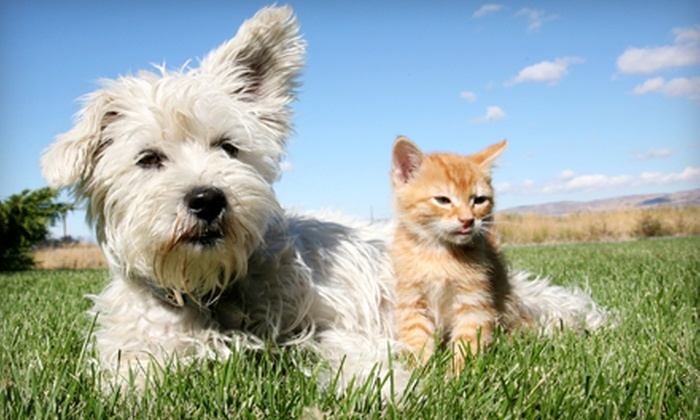 Carolinas Veterinary Care Clinic - Huntersville: Grooming, One Night of Boarding, or Package of Both for a Cat or Dog at Carolinas Veterinary Care Clinic