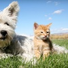 Up to 78% Off Pet Grooming and Boarding