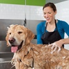 Up to 61% Off Dog Grooming at A Passion For Pets Daycare