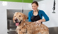 Full Grooming Service for One Bird or Up to Four Cats or Dogs at The Groomer Pet Spa (Up to 60% Off)