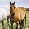 Up to 60% Off Horseback Riding at Twisted Pine Equine Center