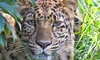 Great Cats World Park - Cave Junction: Admission for Two, Four, or Six for Great Cats World Park (50% Off)