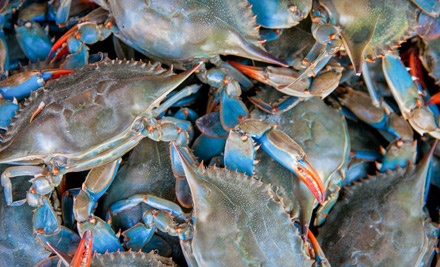 Home-Delivered Crabs and Fresh Seafood from Chesapeake Crab Connection (Half Off). Two Options Available.