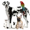 Up to 54% Off Pet Readings with Animal Medium