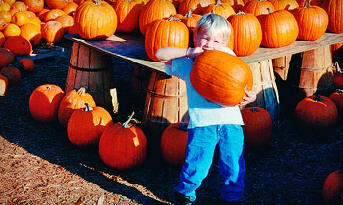 Chester's Pumpkin Patch & 3 Acre Corn Mystery Maze - Chester's Party Barn & Farm: $20 for Four Admissions to Chester's Pumpkin Patch & 3 Acre Corn Mystery Maze ($36 Value)