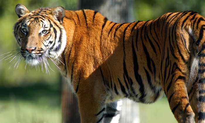 Zoo Miami - Zoo Miami: $15 for a Zoo Package at Zoo Miami ($30.90 Value)