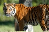 Zoo Miami Foundation - Zoo Miami: $15 for a Zoo Package at Zoo Miami ($30.90 Value)
