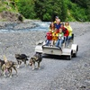 50% Off from Seavey's Ididaride Sled Dog Tours