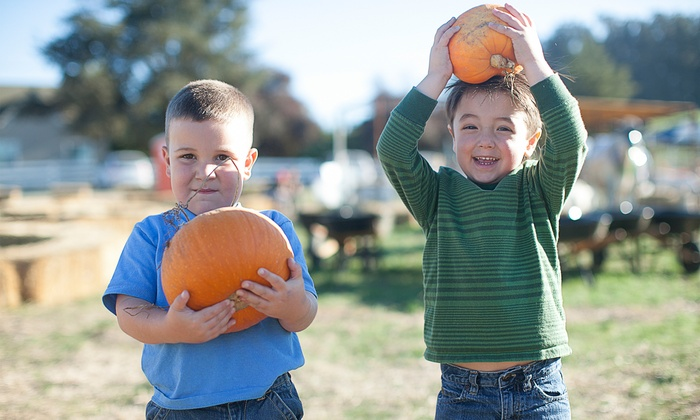 McClelland's Dairy - Petaluma: Pick-Your-Own Pumpkins at McClelland's Dairy Pumpkin Patch (Up to 45% Off). Two Options Available.
