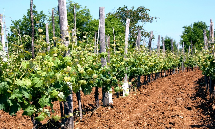 Sand Castle Winery - Tinicum: $21 for a Vineyard Tour for Two at Sand Castle Winery ($42 Value)