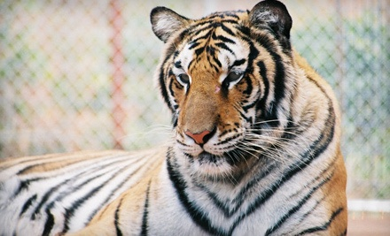Wildlife-Refuge Visit for 2, 4, or 10 at Tiger Creek Wildlife Refuge (Up to Half Off)