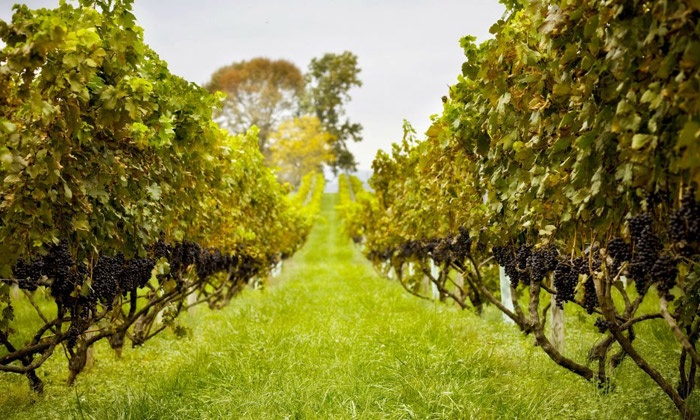 Philip Carter Winery - Hume: Vineyard Tour, Souvenir Wine Glasses, and Charcuterie for Two or Four at Philip Carter Winery (Up to 59% Off)