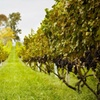 Up to 53% Off Vineyard-Tour Packages