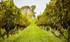 Up to 55% Off Vineyard-Tour Packages