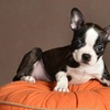66% Off a Pet Photo Shoot with Prints