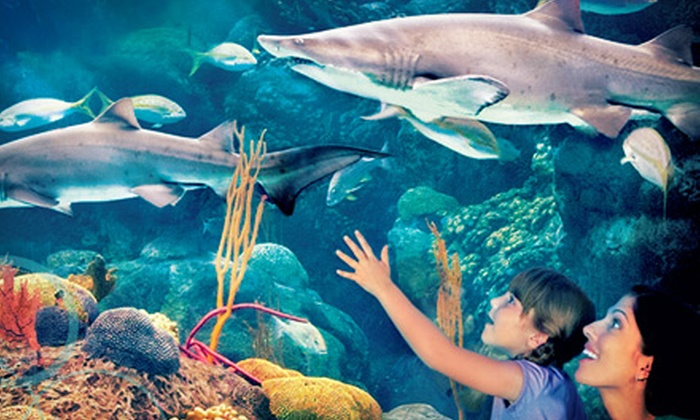 The Florida Aquarium - Downtown Tampa: Visit for Two or Four to The Florida Aquarium (Up to Half Off)