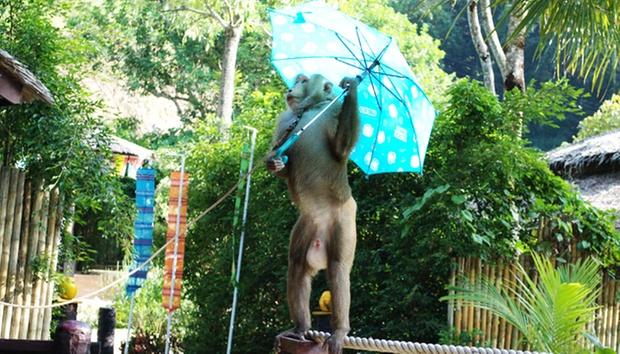 Phuket: Elephant Ride & Animal Show 4