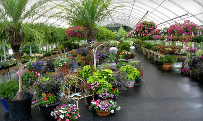 Reese's Plants - Willow Lake: $15 for $30 Worth of Seasonal Plants, Flowers, and Garden Supplies at Reese's Plants in Blythewood