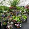 Half Off Plants and Garden Supplies in Blythewood