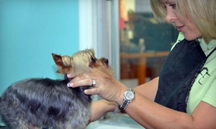 Bark Life - Holiday Village: Sponger Grooming Package for a Small, Medium, or Large Dog at Bark Life in Seminole (Up to 58% Off)