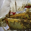 Up to 52% Off a Beekeeping Class