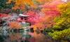 4 piante di acero giapponese
