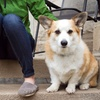 Up to 54% Off Dog Sitting Services