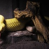 Up to 51% Off Reptile-Museum Visits