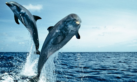 Dolphin Cruise for Child, Senior, or Adult from Olin Marler's Dolphin Cruises (Up to 42% Off)