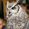 51% Off Audubon Society Membership in Bristol