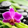 80% Off HydroMassage Therapy