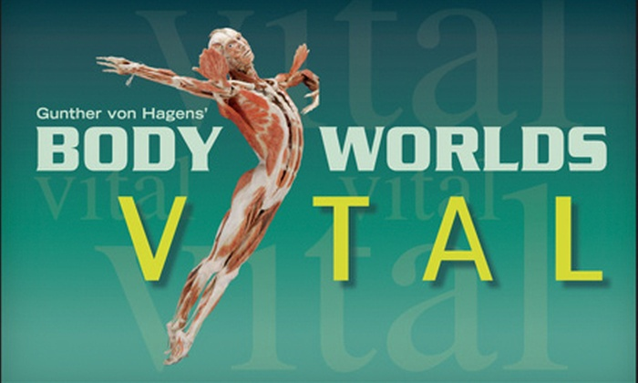 """Body Worlds Vital - Downtown: $20 for """"Body Worlds Vital"""" Human-Anatomy Exhibit for Two at Anchorage Museum ($40 Value)"""