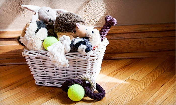 Need Some Sun - Downtown Toronto: $19 for $40 Worth of Pet Supplies from Need Some Sun
